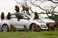 Hyundai-i30-Monkeys-8