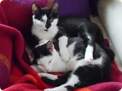 Søskendekærlighed...