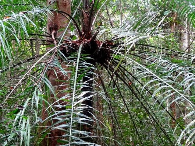 Forêt équatoriale (2)