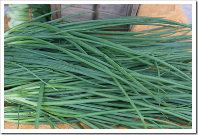 scallion regeneration csa