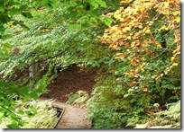 woodland track kincraig