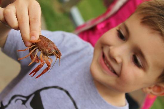 Crawfish 046