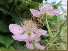 IMG_2034 Bee