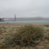 Fog is hanging out over the bridge