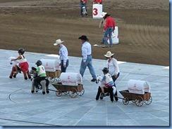 9559a Alberta Calgary Stampede 100th Anniversary - GMC Rangeland Derby & Grandstand Show - intermission kids 'Chuckwagon Race'