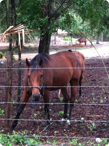 horse1_athomewithh