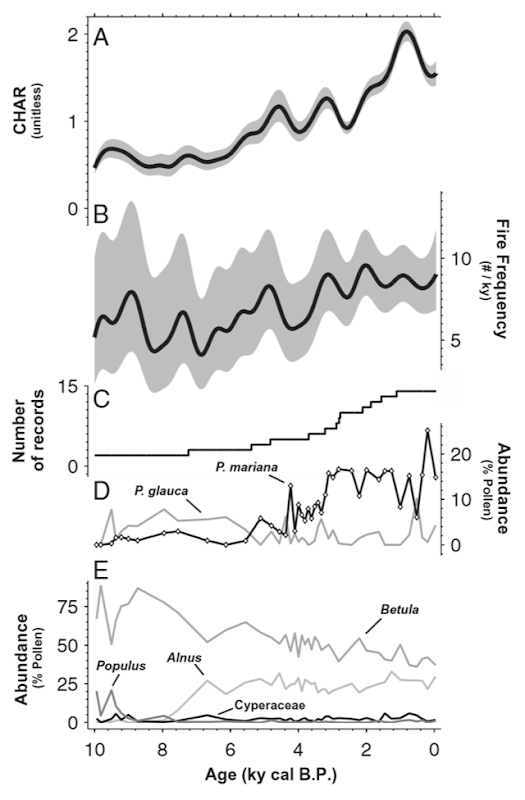 Proxy records of ecosystem change, highlighting millennial patterns of the past 10,000 y. Millennial composite records of (A) CHAR and (B) FF from sediment charcoal analysis (with 90% confidence intervals). (C) Number of records contributing to composite charcoal records. Pollen abundance of (D) key conifer species P. mariana and P. glauca and (E) other major taxa at Screaming Lynx Lake (Fig. 1). Diamond symbols on the P. mariana curve indicate sampling resolution for all pollen data. Graphic: Kelly, et al., 2014