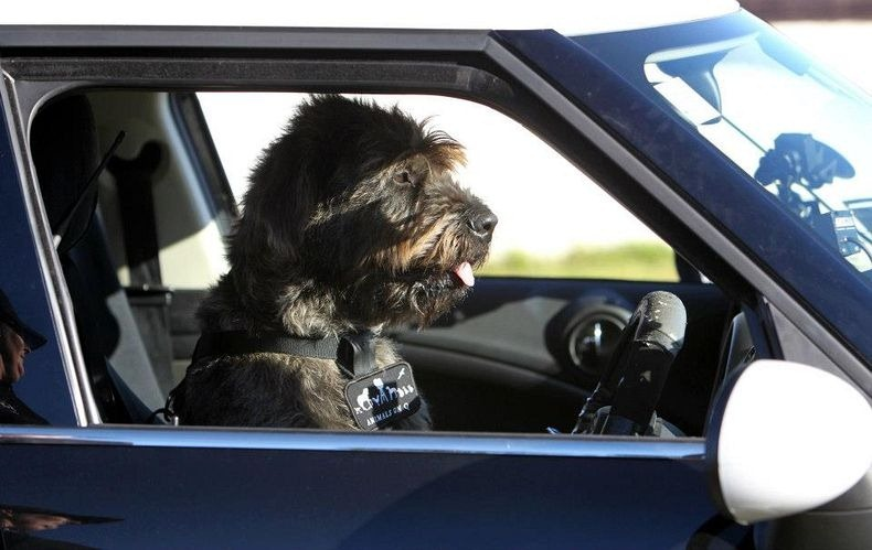 Rescue dogs learn how to drive in New Zealand | Metro News