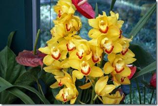 Festival de Orquídeas em Teresópolis 14