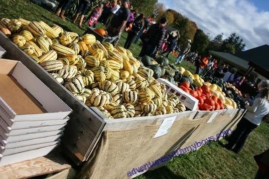 '13 pumpkin picking 011