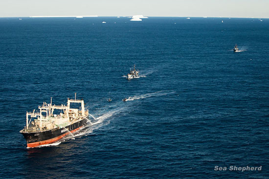 Aerial view of Sea Shepherd Australia ships the Bob Barker and Steve Irwin escorting the Nisshin Maru out of the Southern Ocean Whale Sanctuary, 1 March 2013. Photo: Tim Watters / Sea Shepherd Australia