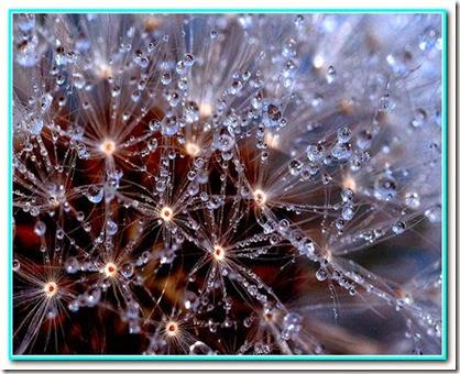 Gotas de prosperidade (2)