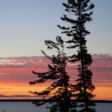 Sunrise and Pines / Near Bayfield with Lake Superior and Madeline Island in the background / Wisconsin