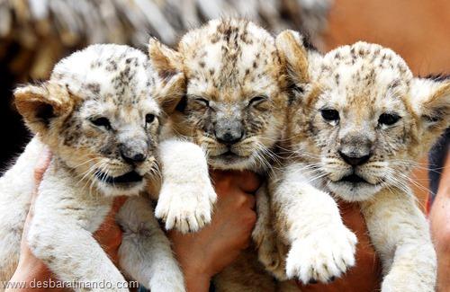 animais recem nascidos filhotes fofos desbaratinando (6)