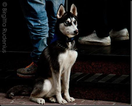 dog_20120331