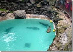 Seals at the Aquarium of Niagara