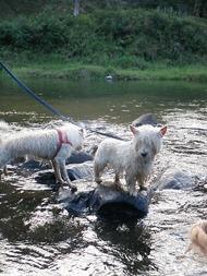 Dogs Trekking 4 (202)