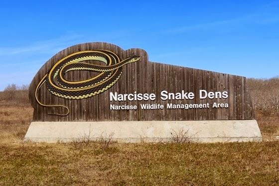 narcisse-snake-pits-2
