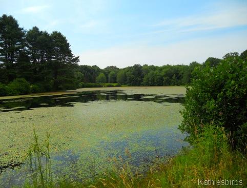 8. the pond-kab
