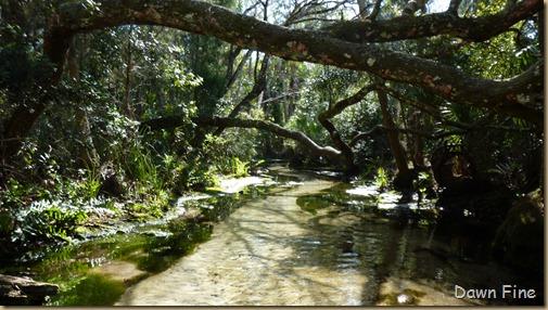 Chassahowitza River canoeing_055