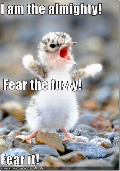 fearthefuzzy