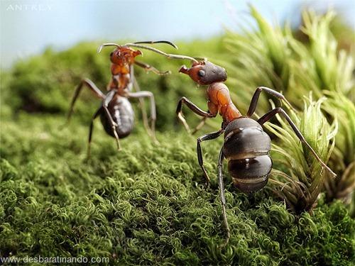 formigas inacreditaveis incriveis desbaratinando  (36)