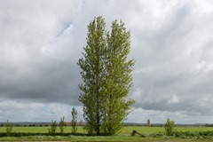130511_Bognor trees 004 ecopy