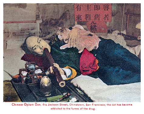 San Francisco Chinatown Opium Den Addicted Cat.jpg