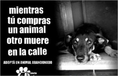 adopcion de animales