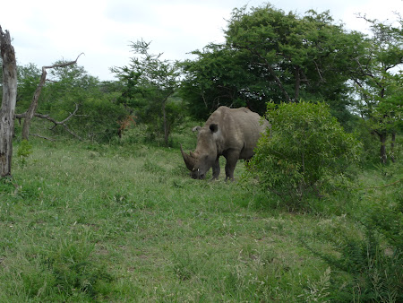 Safari Africa de Sud: rinocer