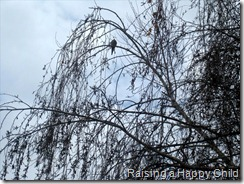 Jan5_Birds1