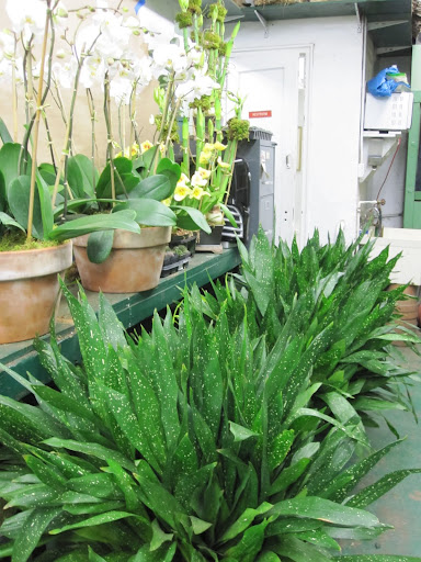 You will be amazed at the size of many plants around the store!
