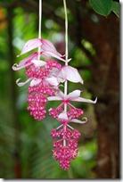flores tropicales (8)