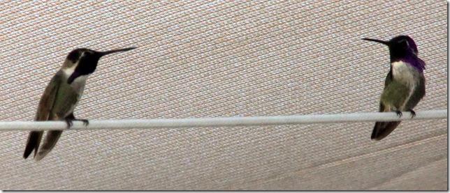 Costas2 5-25-2011 5-01-54 PM 2447x1044