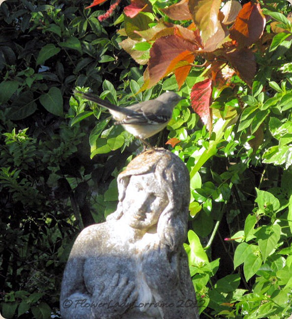 11-04-mockingbird4