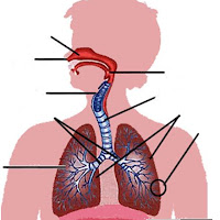 respiratorio novo.JPG