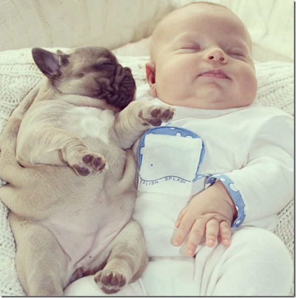 baby-bulldog-puppies-3
