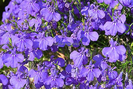 Azul - Glória Ishizaka 17