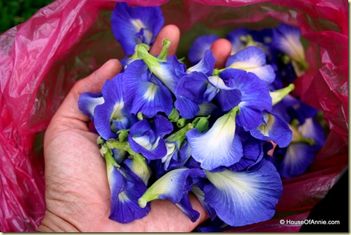 Bag full of Butterfly Blue Pea flower