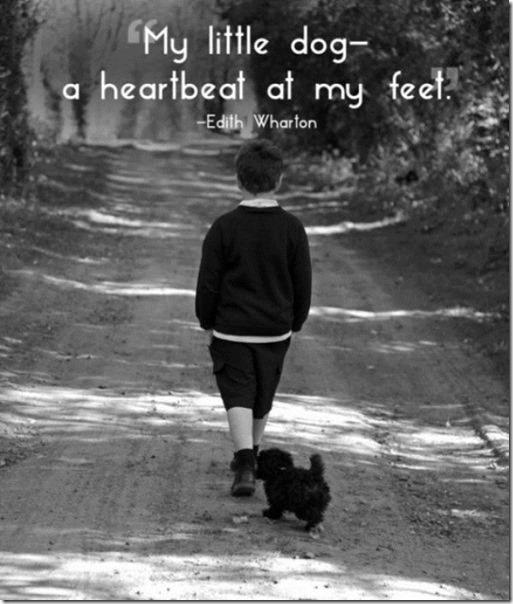pet-quotes-love-1