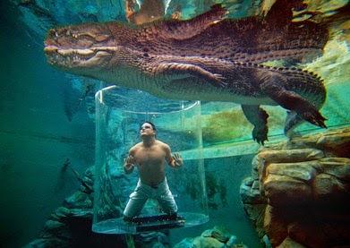 crocosaurus cove aus