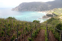 Grape vines overlooking Monterosso