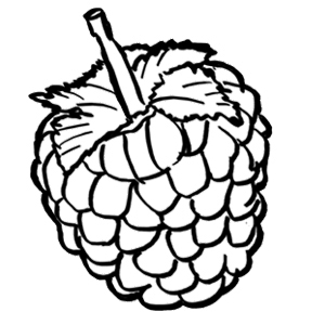 RASPBERRIES COLORING PAGES