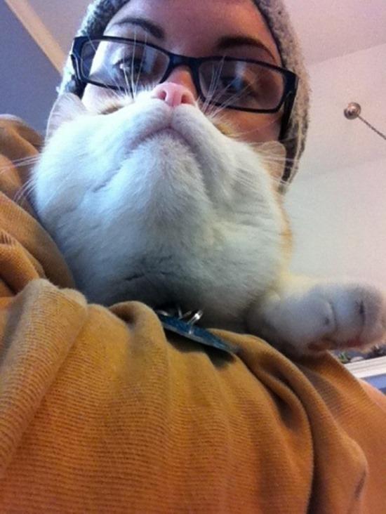 Barbas de gato (9)