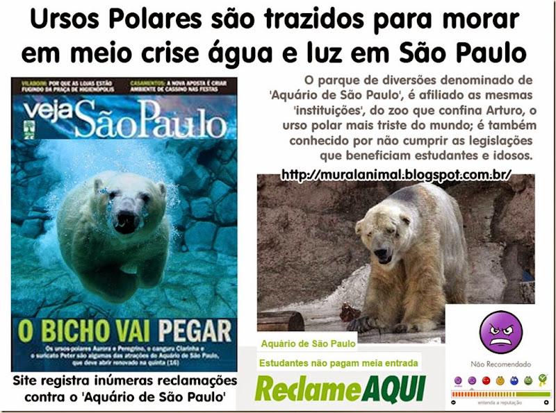 ursos_polares_sao_paulo