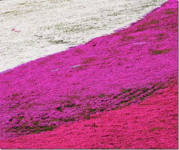 pink-park-japan-6