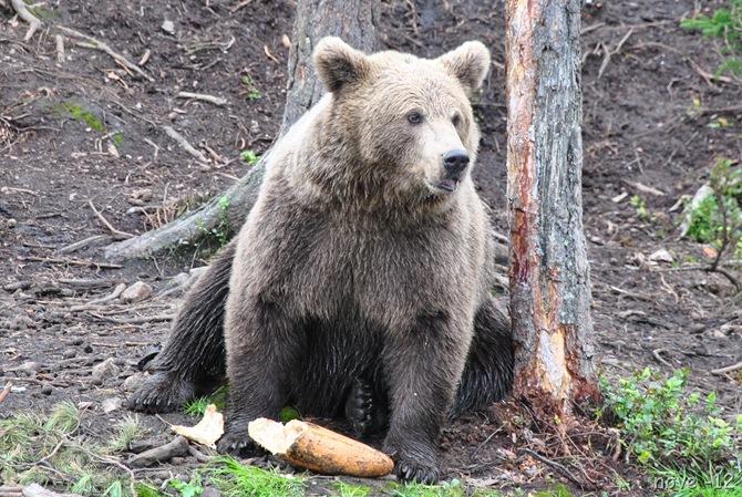 Bjørneparken 104