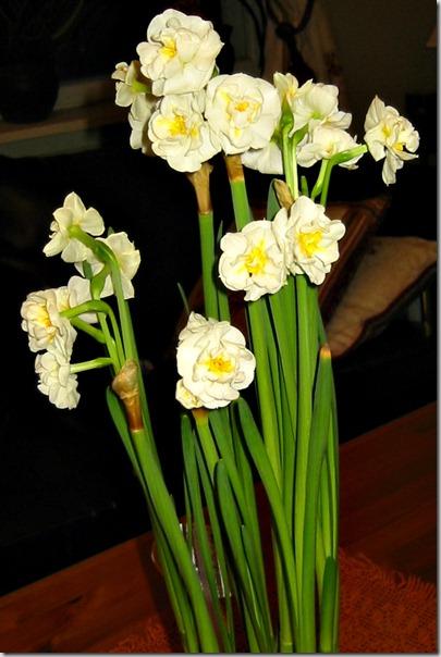 Narsissis bridal crown7