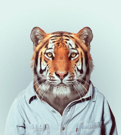 animais roupas humanas - Tigre