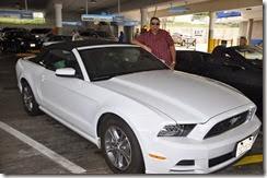 California Mustang